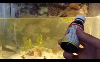 Биомицин для лечения рыбок в аквариуме – домашняя аквариумистика