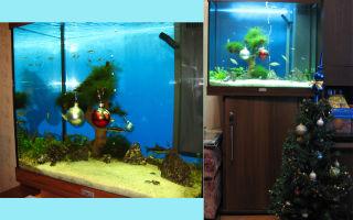 Новогодний аквариум – домашняя аквариумистика