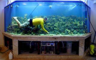 Мы – покорители аквариумных вершин! – домашняя аквариумистика