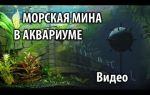 """Декорация """"морская мина"""" в аквариуме, своими руками – домашняя аквариумистика"""