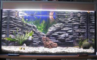 Крутой задний фон для аквариума: 5 способов сделать это своими руками – домашняя аквариумистика