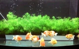 Стресс аквариумных рыбок – домашняя аквариумистика