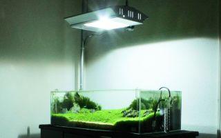 6 типов аквариумных ламп – домашняя аквариумистика