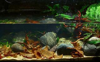 Биотопный аквариум, как вид аквариумного искусства! – домашняя аквариумистика