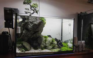 Декорирование аквариума на 140 л. в стиле бансай – домашняя аквариумистика