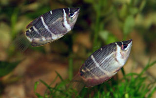 Летнее, аквариумное настроение! – домашняя аквариумистика