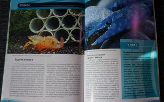 Чем кормить аквариумных креветок и раков, все о кормлении! – домашняя аквариумистика
