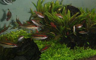Валентинка от оливера кнотта! – домашняя аквариумистика