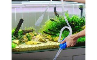 Как чистить и мыть аквариумный фильтр? – домашняя аквариумистика