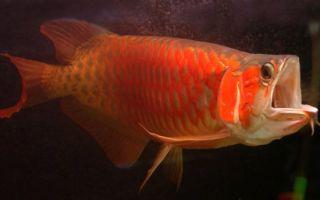 Пурпурный закат морского аквариума! – домашняя аквариумистика