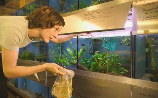 Твои выходные проходят у аквариума? – домашняя аквариумистика