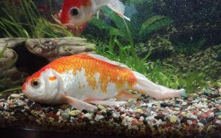 Это настоящая змея или рыба в аквариуме? – домашняя аквариумистика