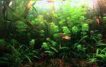 Перекись водорода в аквариуме: дозировка от водорослей и при лечении рыб – домашняя аквариумистика