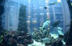 Супер-мега аквариум берлина aquadom – домашняя аквариумистика