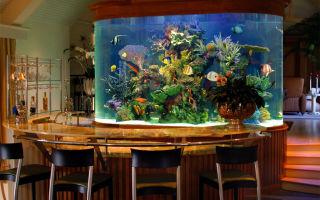 Необычайно красивый, завораживающий, морской аквариум! – домашняя аквариумистика
