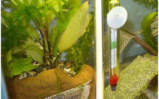 Секреты по поддержанию температуры с помощью аквариумных нагревателей – домашняя аквариумистика