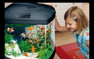 Скоро день детства! – домашняя аквариумистика