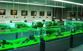 Такаши амано: фото, концепция, биография – домашняя аквариумистика