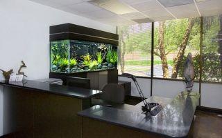 Аквариум на работе и в офисе – домашняя аквариумистика