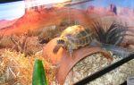 Стеклянный сом: содержание, уход, фото-видео обзор – домашняя аквариумистика