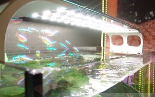 Светодиодная лента подсветка аквариума – домашняя аквариумистика