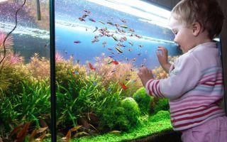Аquarium for a child – домашняя аквариумистика