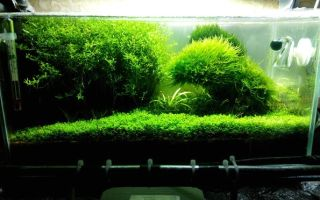 Развитие аквариума за год! скажи нет стагнации. – домашняя аквариумистика