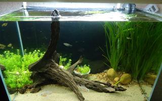 Гризеофульвин для аквариума – домашняя аквариумистика