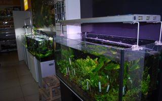 Мастер-класс по запуску классического аквариума от компании aquael – домашняя аквариумистика