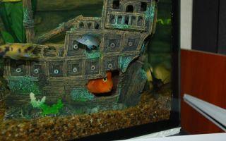 Фон для аквариума с сюрпризом своими руками – домашняя аквариумистика
