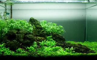 Легкий, воздушный аквариум-травник! как вам? – домашняя аквариумистика