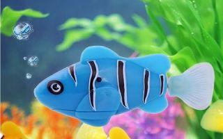 Рыбы роботы, ужс! – домашняя аквариумистика