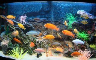 Виды аквариумов с фото и описанием – домашняя аквариумистика