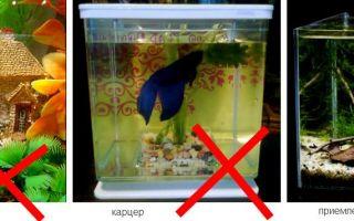 Как много аквариумных рыбок совместимы с рыбкой петушок? – домашняя аквариумистика