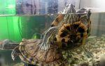 16 самых популярных видов домашних черепах – домашняя аквариумистика