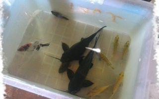 Перезапуск аквариума: быстрый и беспощадный! – домашняя аквариумистика