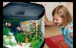 Аквариум и рыбки для детей: советы родителям! – домашняя аквариумистика