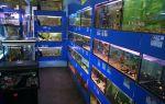 Зоомагазины самары – домашняя аквариумистика