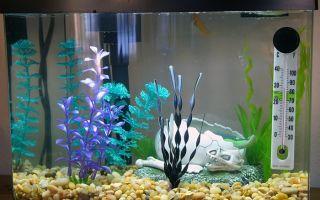 Грунт для аквариума, какой лучше выбрать? – домашняя аквариумистика