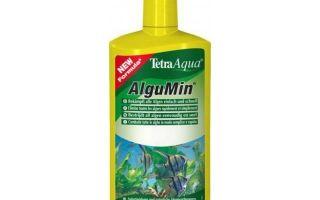 Средства и препараты от аквариумных водорослей – домашняя аквариумистика