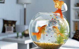 Аквариум – это мир, в который я окунаюсь с головой! это мир моей свободы, умиротворения и творчества! – домашняя аквариумистика