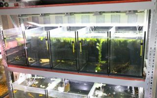 Содержание рыб в замкнутых системах – домашняя аквариумистика
