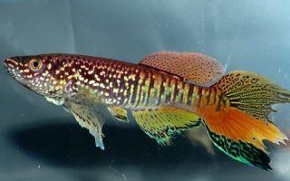 Объемный фон из грунта в аквариуме – домашняя аквариумистика