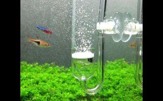 Все об со2 для аквариума – домашняя аквариумистика