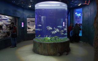 Интересный аквариум в индийском аэропорту дели! – домашняя аквариумистика
