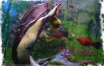 Катушка аквариумная улитка: польза и вред! – домашняя аквариумистика