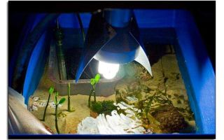 Охлаждение аквариума своими руками – домашняя аквариумистика