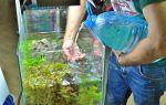 Что будет, если не отстоять аквариумную воду – газовая эмболия! – домашняя аквариумистика