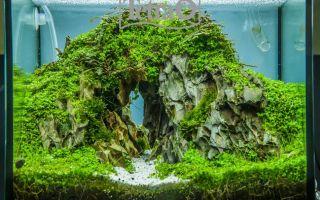 Скалы, мхи и монте-карло. красота! – домашняя аквариумистика