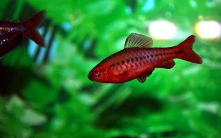 Пуд соли в аквариум: сколько соли добавлять?! – домашняя аквариумистика